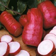 Radish China Rose Appx 1500 Seeds